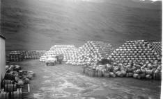 From the herring era - Tunnuskemman